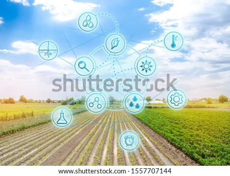 Smart innovative high technologies and innovations in agro-industry. Agricultural startup. Automation and crop quality improvement. Eggplant plantations grow in the field.