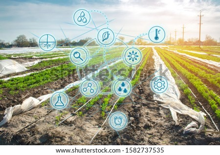 Smart innovative high technologies and innovations in agro-industry. Agricultural startup. Automation and crop quality improvement. Carrot plantations grow in the field.