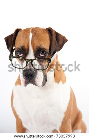 Smart Looking Dog Wearing Green Tortoise Shell Glasses