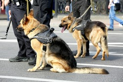 Smart police dogs outdoors