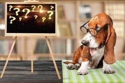 Smart puppy dog