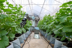Smart robot installed on melon  greenhouse for care and assist farmers harvest melon fruit, smart farm 4.0 on modern agriculture concept.