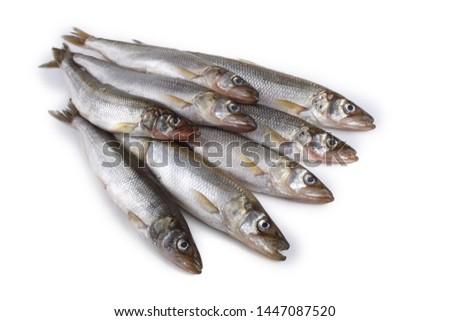 Smelt fish isolated on white. (Big Pacific smelt - Osmerus mordax)