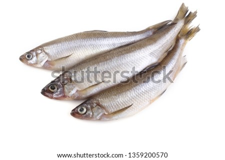 Smelt fish isolated on white. Pacific smelt variety