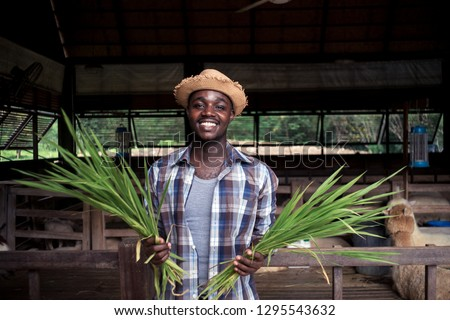 Smile African farmer man holding grass.