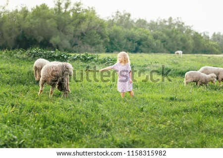 smiling and trying to feed sheep in summer outdoors / happy kids. children are brought up in nature. wild child. children and animals.