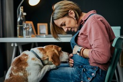 Smiling charming caucasian pregnant woman sitting at home office, touching belly and looking at her beloved dog. Dog is curious and wants to play with her.