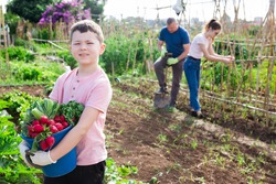 Smiling cute tween boy posing with crop of vegetables while family working in home garden on sunny summer day.