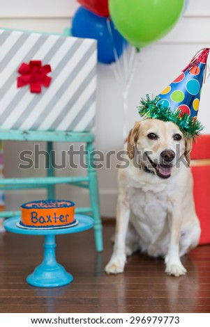 Smiling dog celebrates birthday