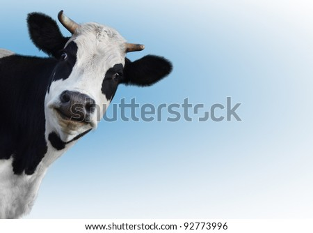 Smiling funny cow on a blue background