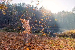 Smiling girl child throwing dry leaves in the air at beautiful autumn sunset.