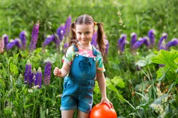 smiling girl with ponytails in denim overalls with shorts and a multi-colored t-shirt is standing on a purple lupine field.