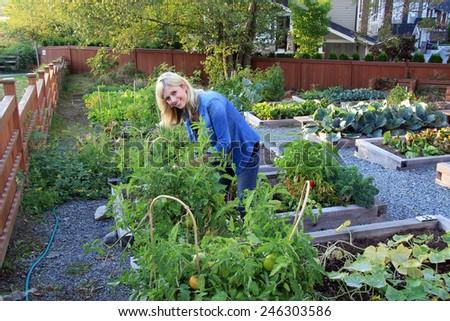 Smiling lady gardener in a community vegetable garden.