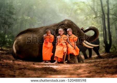 smiling novice monk Thailand and big elephant with forest background, novice monk Thailand sit on elephant's knee smiling and laughing happily