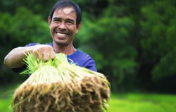 Smiling of happy agriculture farmer,rice growing season started in the rainy season every year in Thailand.farmers, rice farmers, happy farmers-image.