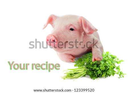 Smiling pig Danish Landrace breed. With a beam of green parsley. Isolated on white background