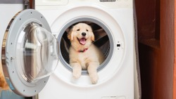 Smiling puppy in washing machine