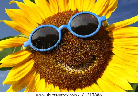 Smiling Sunflower Images Smiling Sunflower