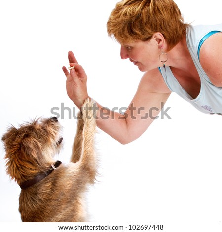Smiling woman gives treat to small shaggy dog. They have similar hair color and texture. They face each other in profile, dog's paws on woman's forearm. Isolated on white, square with copy space.