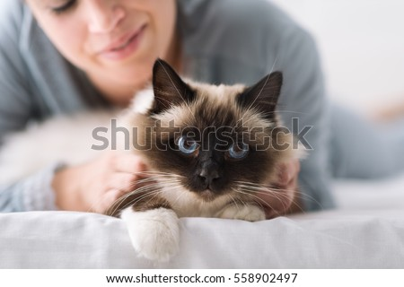 Smiling woman lying on the bed and cuddling her soft beautiful cat, pets and lifestyle concept #558902497