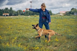 Smiling woman professional dog trainer playing with detection dog outdoors in grassy field