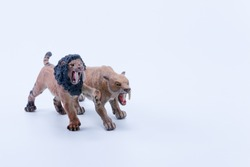 Smilodon saber-toothed two roaring and in attack position fighting with white background front view