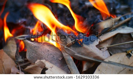 Smoke and burning of dry leaves Dry leaves