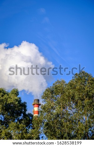 Smoke coming out of a chimney of a paper pulp industry, among eucalyptus trees.