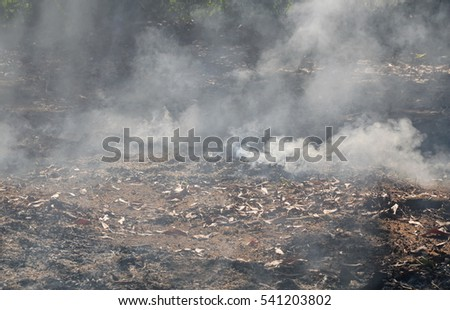 smoke from leaf burning on ground in garden