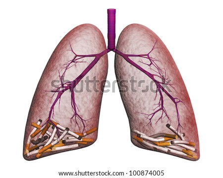 smoker's lungs on a white background