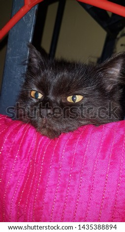 smokey my cute cat (animal lover)