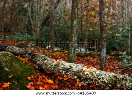 Smoky mountains national park, autum forest with side creek and fallen leaves and log.