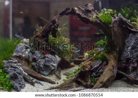 Smooth Focus,Aquarium and garden decoration with beautiful and lively underwater plants are designed to be natural as well as natural and underwater and beautiful fish are also healthy.