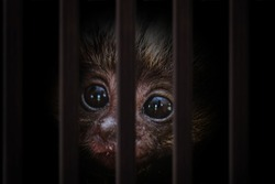 smuggling of animals. Photomontage of young monkey inside a wooden cage, mistreatment of exotic birds.