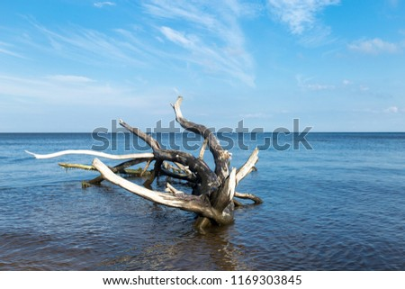 Snag in the sea. A snag on the sand of the beach. - Shutterstock ID 1169303845