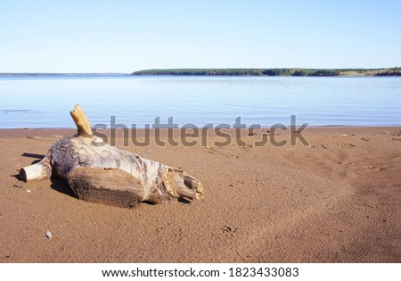 Snag on the beach sand. Scenic view with Snag of the trunk. Beautiful summer landscape.