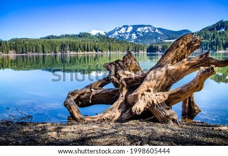 Snag on the shore of a mountain lake. Mountain lake shore snag. Snag on lake shore. Snag on mountain lake shore