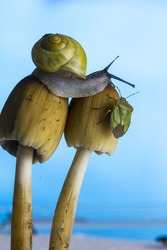 Snail and a green stink bug sitting on mushrooms next to each other/Snail and bug on mushroom/animal nature
