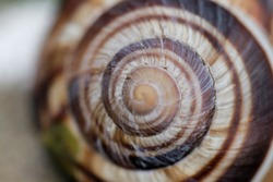 Snail and snail shell