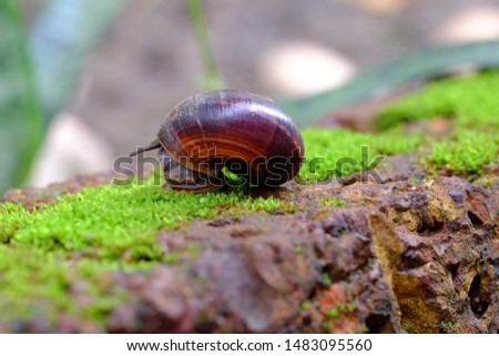 Snail animal life on the green with red brick and crawling find some some food and blur background.