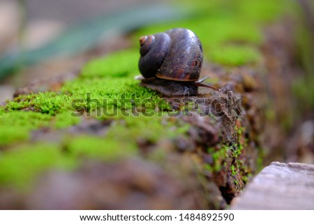 Snail animal life on the green with red brick and crawling find some some food and blur background.Selective focus.