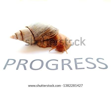 snail as a symbol: slow progress is still progress #1382281427