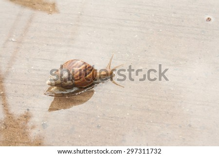 Snail climb on a paved road with water. Slow life.