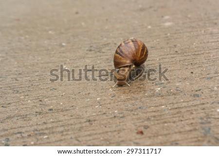 Snail climb onto the concrete floor. Slow life.