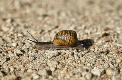 Snail crawling in sand on stony surface.