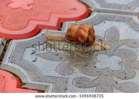 Snail crawling on a sidewalk #1496948735