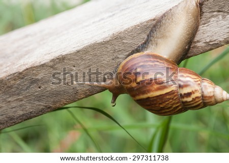 Snail crawling on an old wooden plate. Slow life.