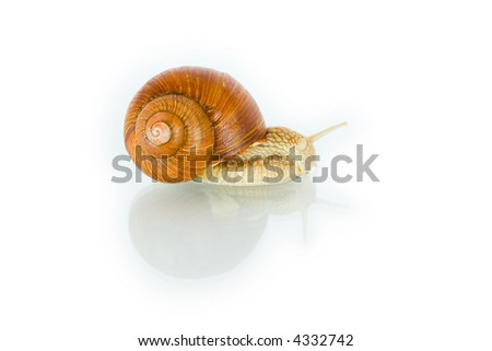 Snail creeping on a white background