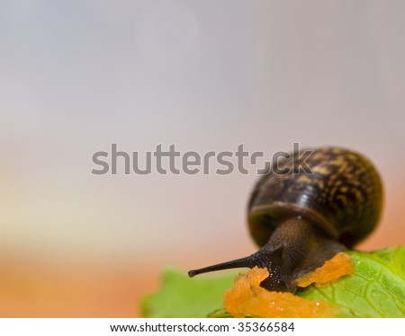 Snail creeping on cabbage leaf and grated carrot