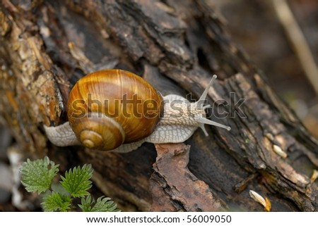 Snail creeping on the ground
